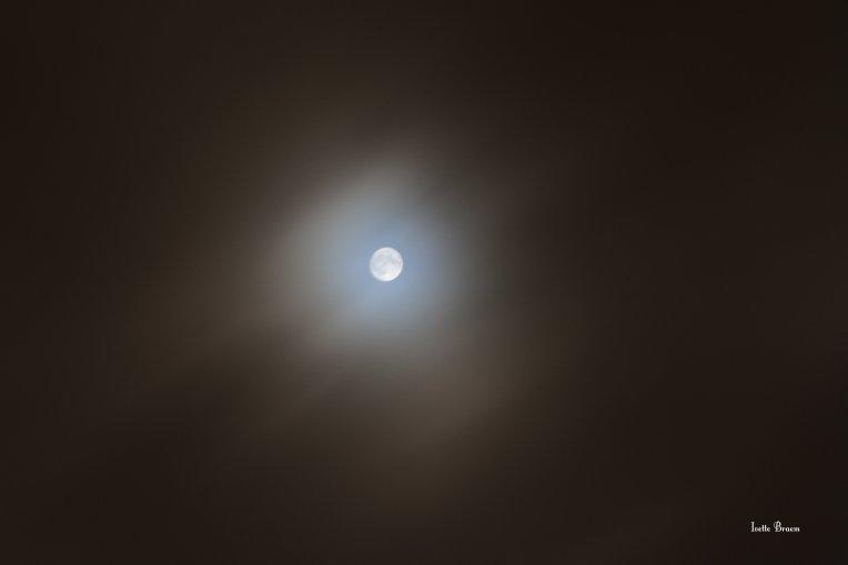 lieve-maan