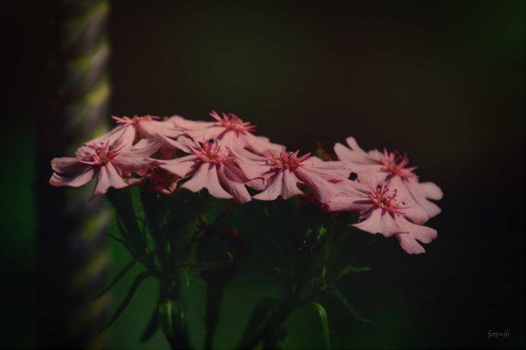 een stille bloem