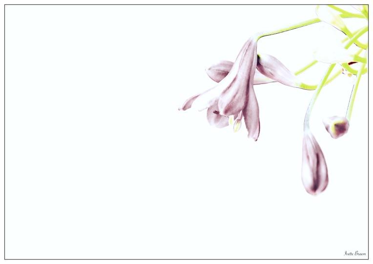 fijnere gestyleerde bloem