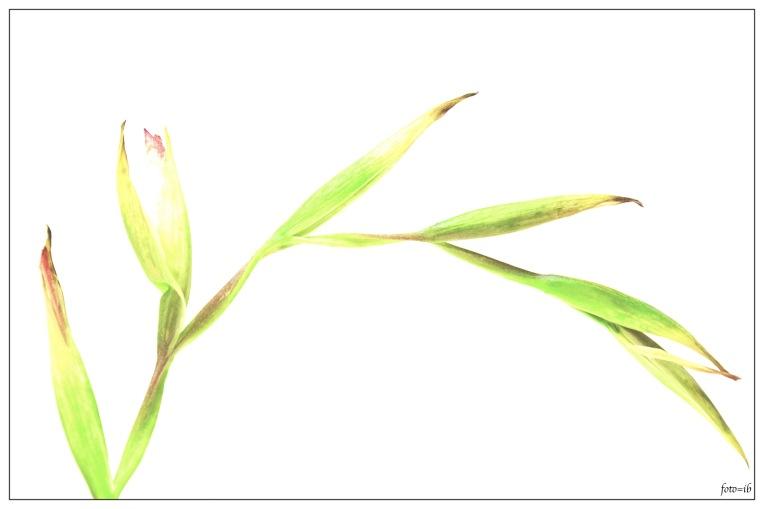 gestyleerde bloem