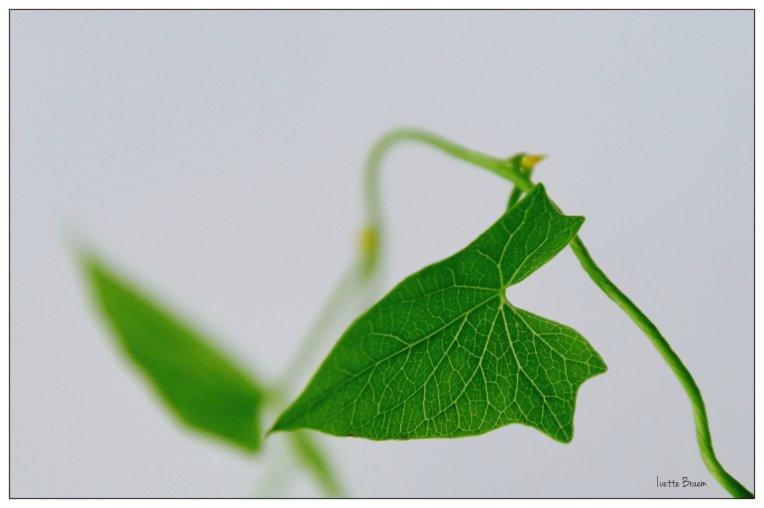 groen bladje